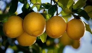 propiedades-del-limón